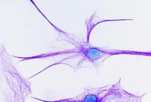 brain_cells blue purple