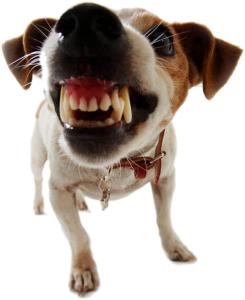 Frustration Dog